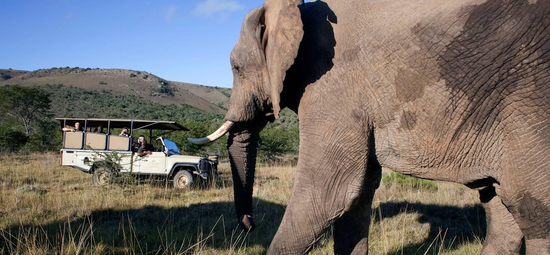 Parc d'Addo Elephant - Afrique du Sud