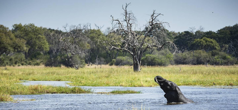 Eléphant se baignant dans la rivière Khwai - Moremi Game Reserve - Botswana
