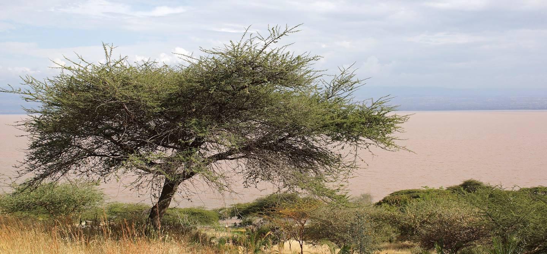 Lac Langano - Région Oromia - Ethiopie