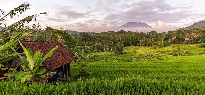 Rizières de Sidemen - Bali - Indonésie