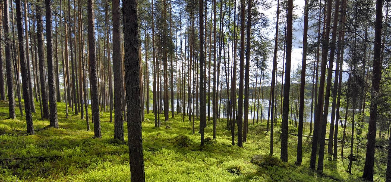 Paysage de Carélie - Finlande