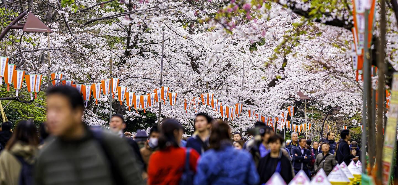 Parc d'Ueno - Tokyo - Japon