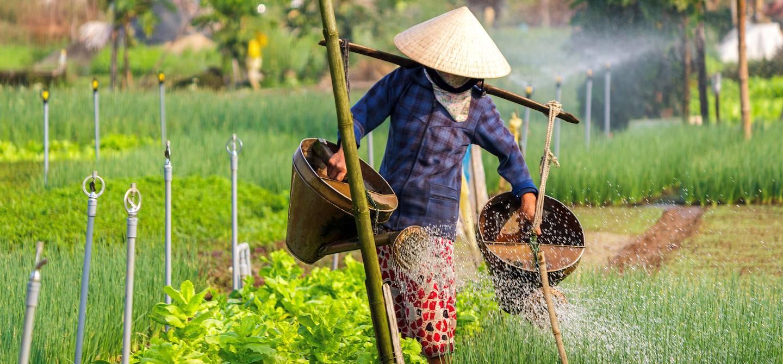 Paysan dans les environs de Hoi An - Vietnam