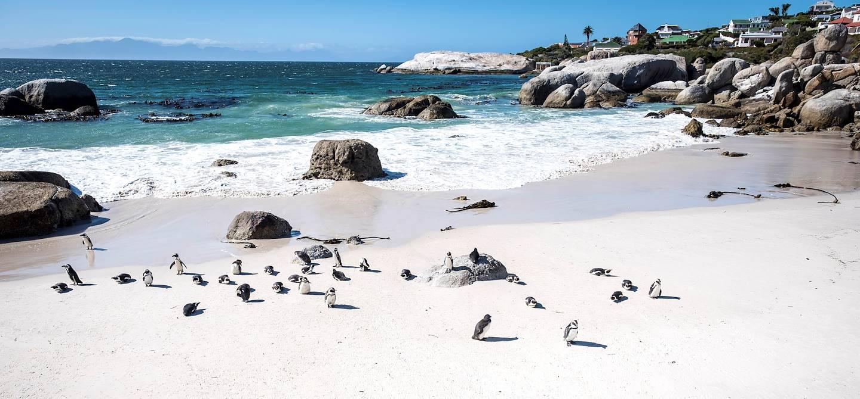 La Péninsule du Cap : colonie de manchots sur la Boulders Beach - Le Cap - Afrique du Sud