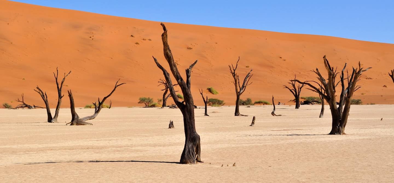 Dead Vlei - Dunes de Sossusvlei - Parc national du Namib-Naukluft - Namibie
