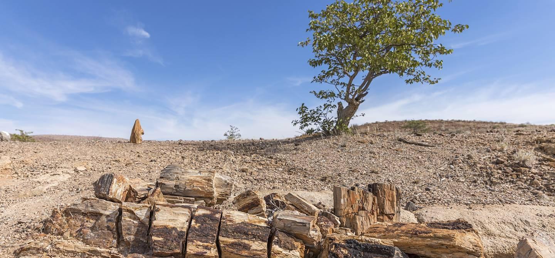 Forêt pétrifiée de la région du Damaraland - Namibie