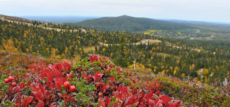 Panorama sur la Laponie finlandaise vue de Ruka-Kuusamo - Laponie - Finlande