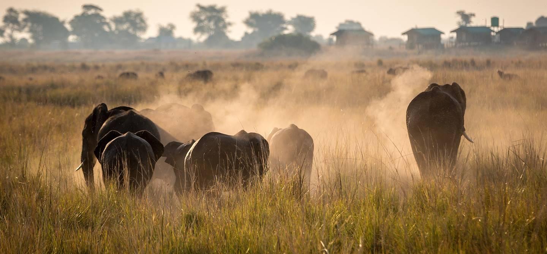 Éléphants dans le parc national de Chobe - Botswana