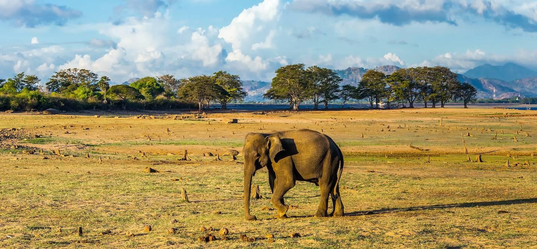 Parc national d'Uda Walawe - Sri Lanka