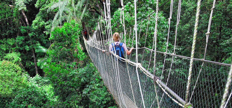 Parc National de Taman Negara - Malaisie