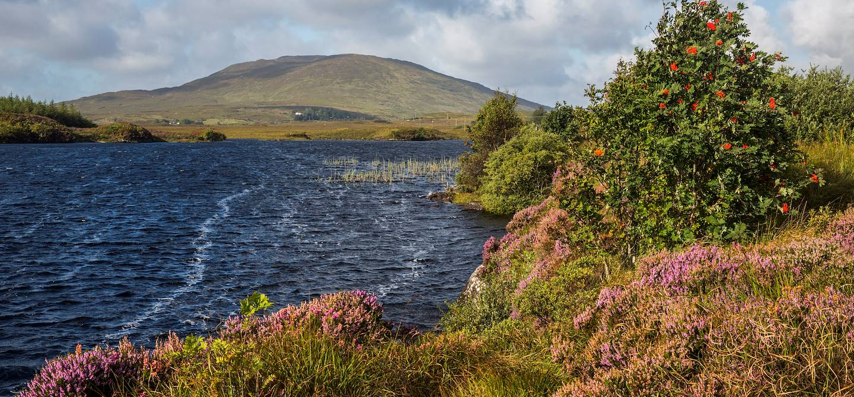 Paysage du Connemara - Maam Cross - Comté de Galway - Connemara - Irlande