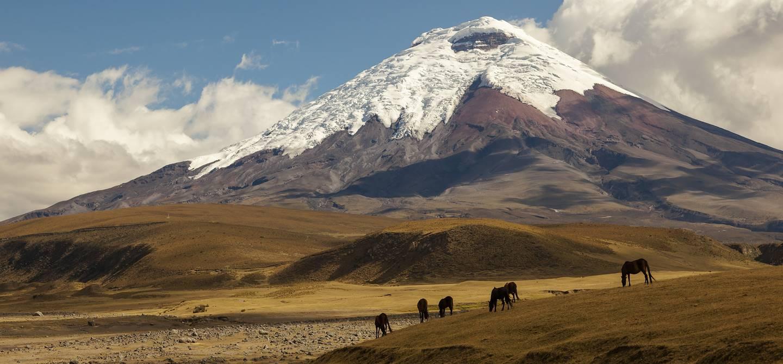 Volcan Cotopaxi - Province de Cotopaxi - Equateur