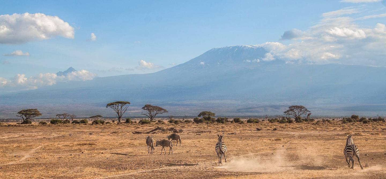Zèbres devant le Kilimandjaro - Parc national d'Amboseli - Tanzanie