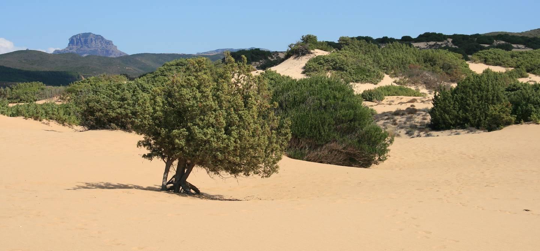 Dunes de Piscinas - Costa Verde - Sardaigne