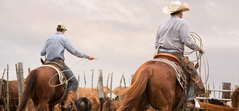 Élevage de bovins dans un ranch - États-Unis