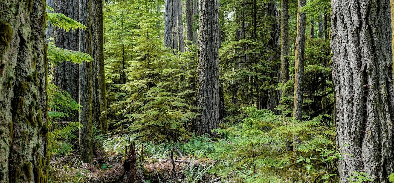 Forêt pluviale - Réserve de parc national Pacific Rim - Île de Vancouver - Canada
