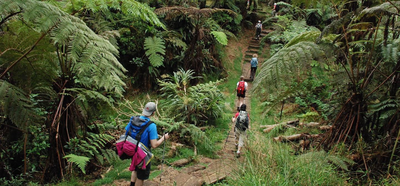La forêt de Bélouve  – île de la Réunion