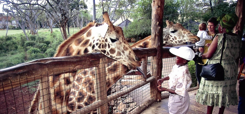 Giraffe Center - Nairobi - Kenya