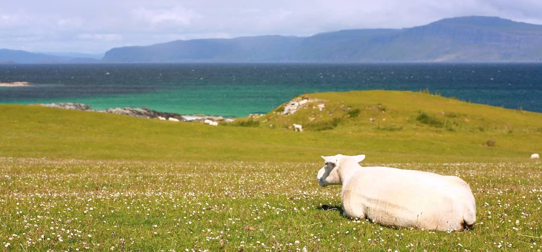 Ile de Iona - Hébrides intérieures - Ecosse