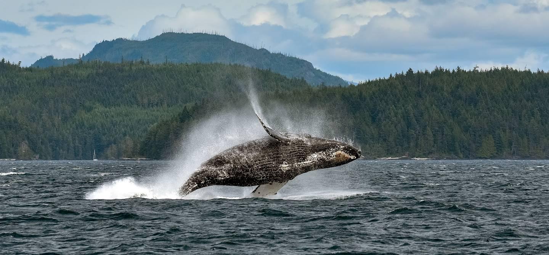 Observation de baleines à Telegraph Cove - Île de Vancouver - Canada