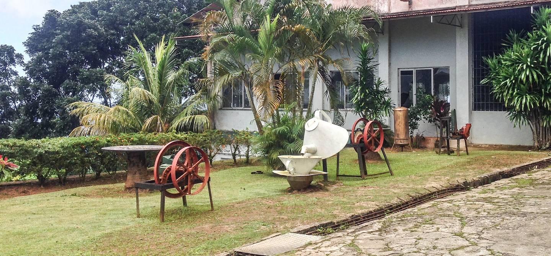 Visite de l'usine de thé de Mahé - Ile de Mahé - Seychelles