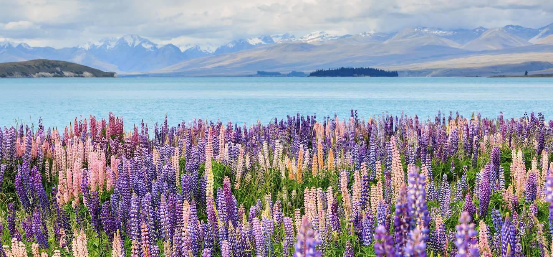 Lac Tekapo - île du Sud - Nouvelle-Zélande
