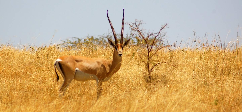 Parc national de Nechisar - Ethiopie