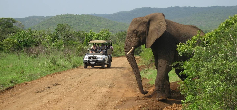 Parc National Hluhluwe - Afrique du Sud