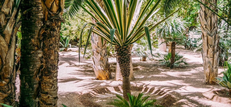Palmeraie de Marrakech - Maroc