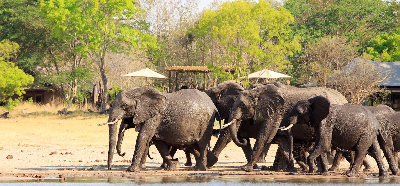 Troupeau d'éléphants dans le parc national de Hwange - Zimbabwe