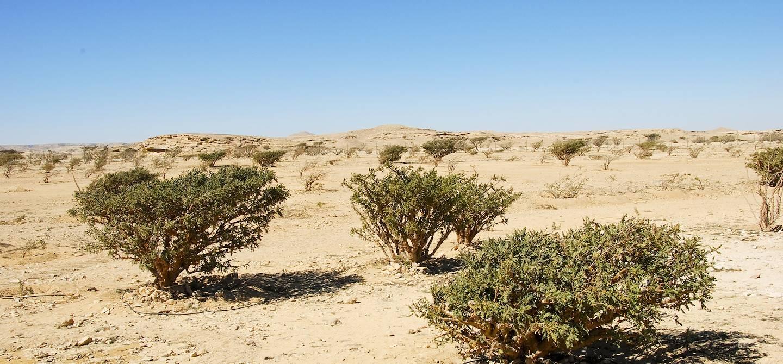 Wadi Dawkah - Oman