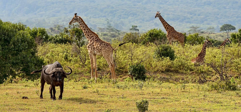 Parc National d'Arusha - Tanzanie
