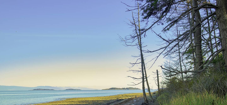 Parc provincial de Rathtrevor Beach - Île de Vancouver - Canada