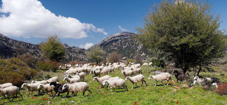 Plateau d'Omalos - Crète occidentale - Grèce