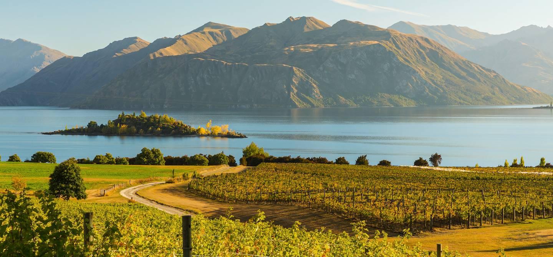 Vignoble près du lac Wanaka - île du sud - Nouvelle-Zélande