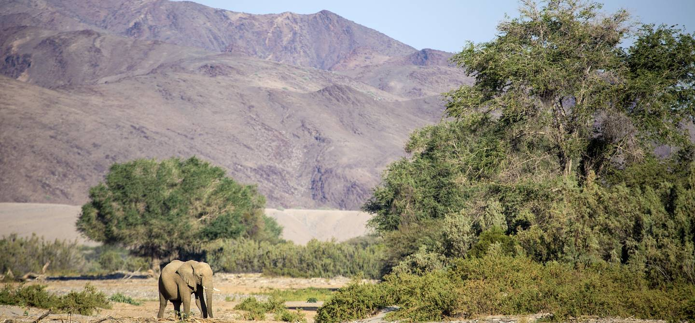 Région du Kaokaland - Namibie