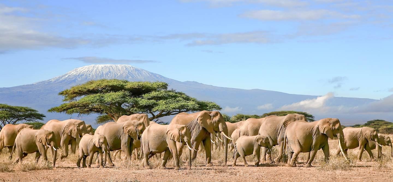 Éléphants dans la réserve du Masai Mara - Kenya