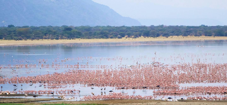 Faune sur le lac Manyara - Tanzanie
