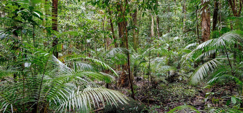 Forêt tropicale de Daintree - Le Queensland - Australie