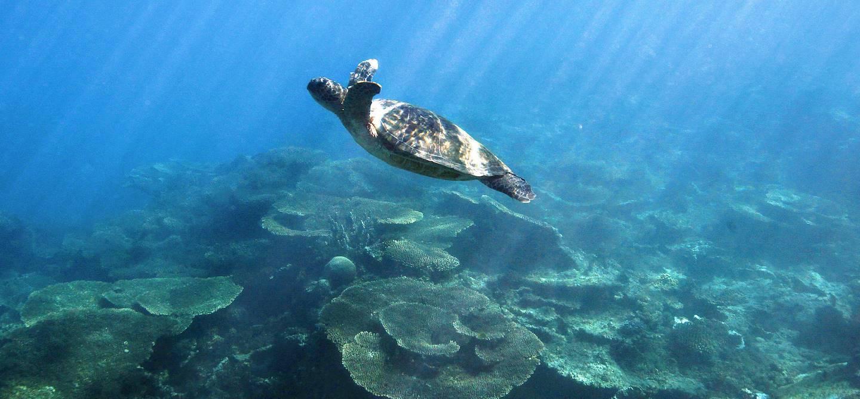 Barrière de corail - Ningaloo Marine Park - Autralie