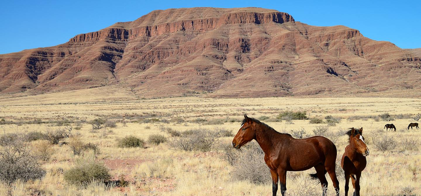 Chevaux sauvages - Namibie