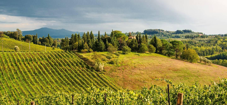 Vignobles dans la région du Chianti - Italie