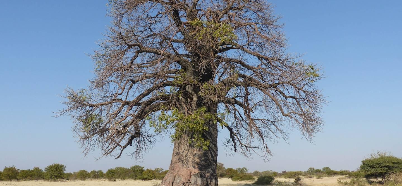 Pan de Makgadikgadi - Botswana