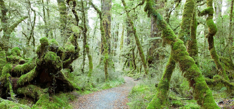 Lake Gunn Nature Walk - Te Anau - Nouvelle-Zélande