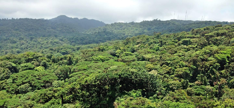 Canopée Monteverde - Puntarenas - Costa Rica