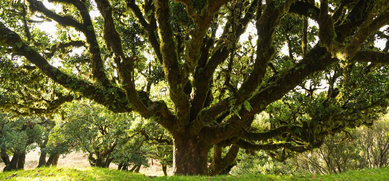 Forêt Laurifère de Madère - Portugal