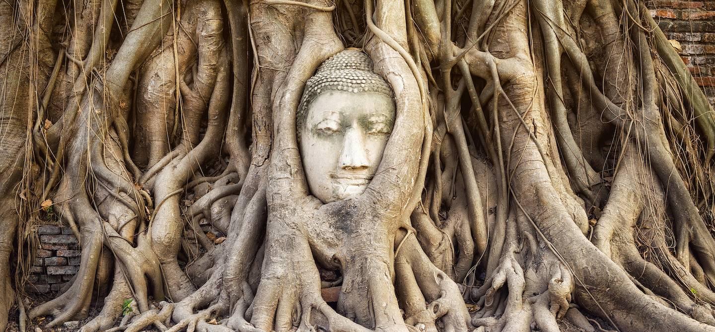 Bouddha enchevêtré dans les racines d'un arbre, au Temple Wat Mahathat - Ayutthaya - Thaïlande