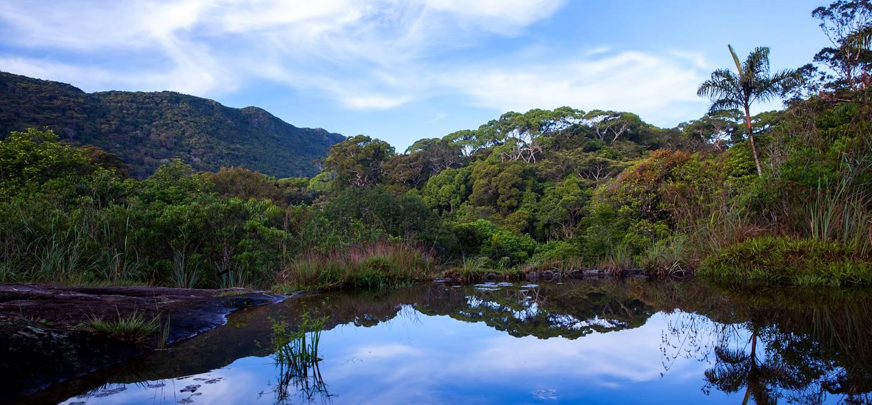 La réserve forestière de Sinharâja - Provinces du Sud - Sri Lanka