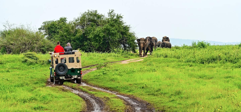 Safari dans le Gal Oya National Park - Sri Lanka