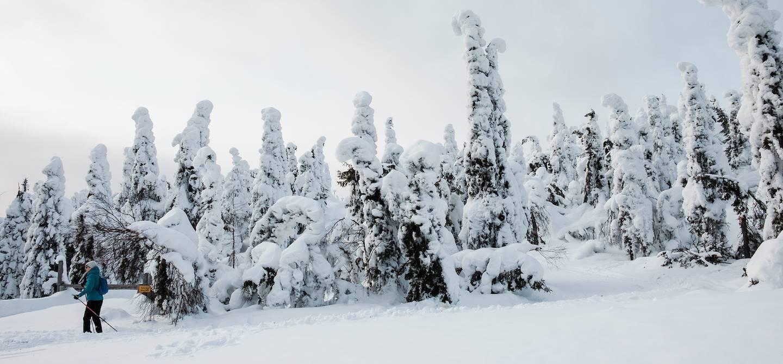 Skieur à travers la forêt enneigée - Syote - Laponie - Finlande